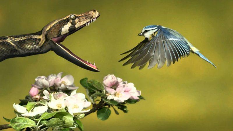 snake-bird