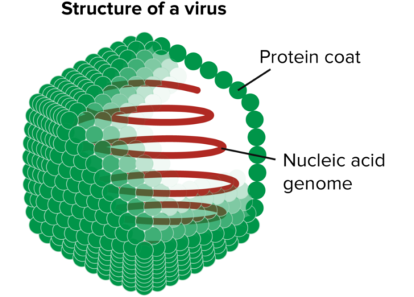 virus-structure