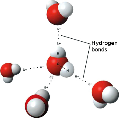 3D_model_hydrogen_bonds_in_water