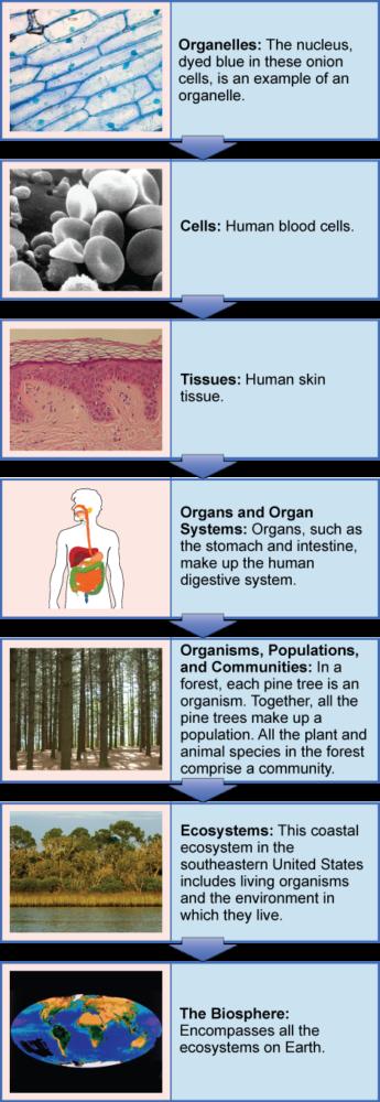 levels-of-organization