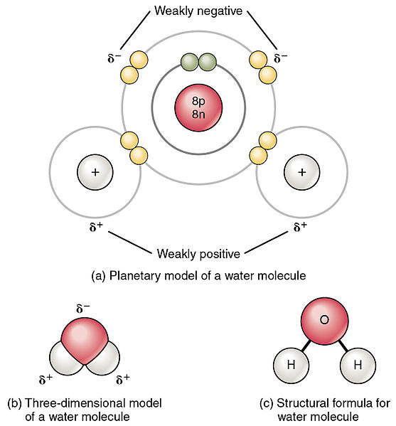 water-polar-covalent-bond