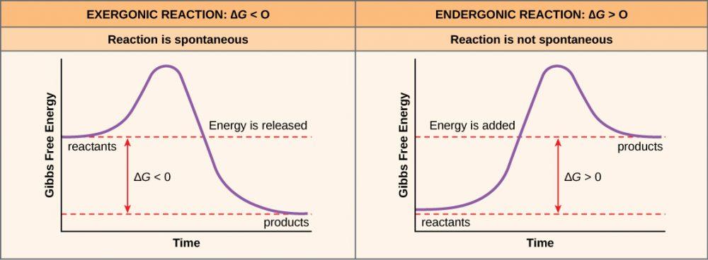 gibbs-free-energy