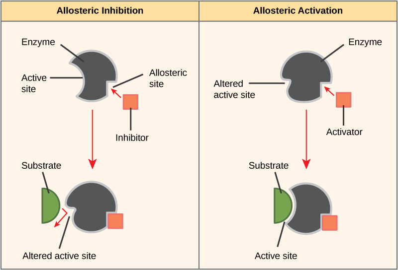 allosteric-inhibition