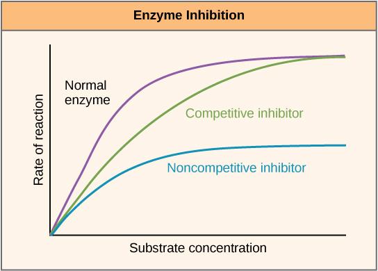 enzyme-regulation