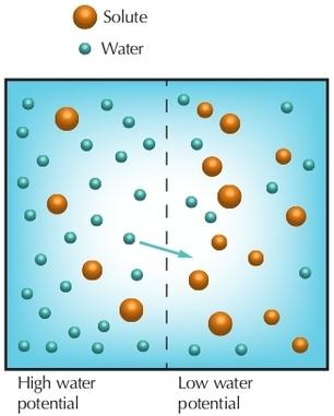 osmosis-biology