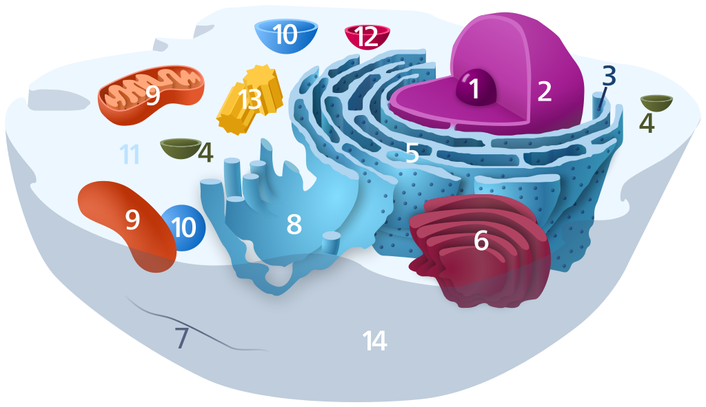 typical-animal-cell
