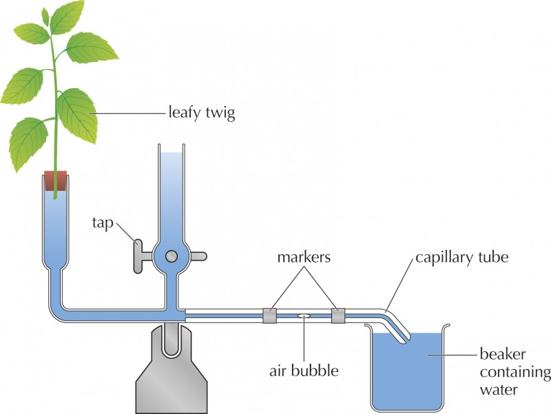 Measuring Rate of Transpiration