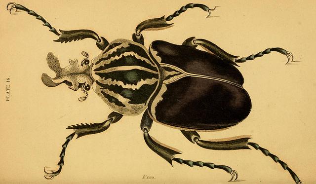 Evolutionary Development of the Skeleton