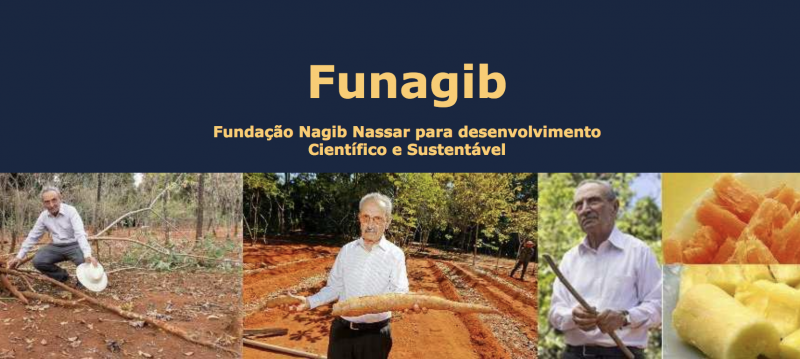 Study in Brazil: Apply for FUNAGIB Scholarship for African Students Working on Cassava