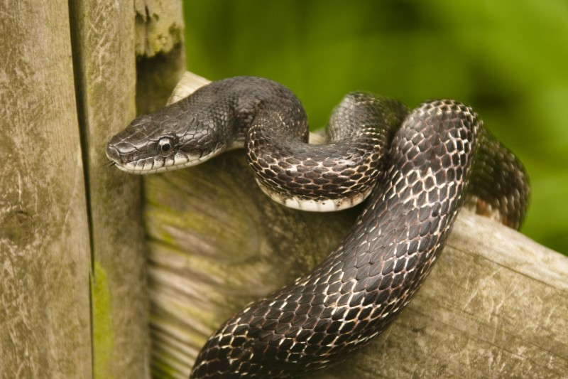 No Snake Swallowed Money From Our Office - JAMB Reacts to 'Money-Swallowing' Snake Report
