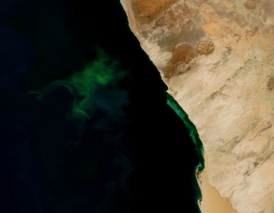 This photo shows a bloom of green bacteria in water.