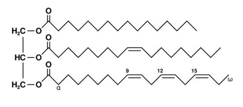 Structure of a triglyceride