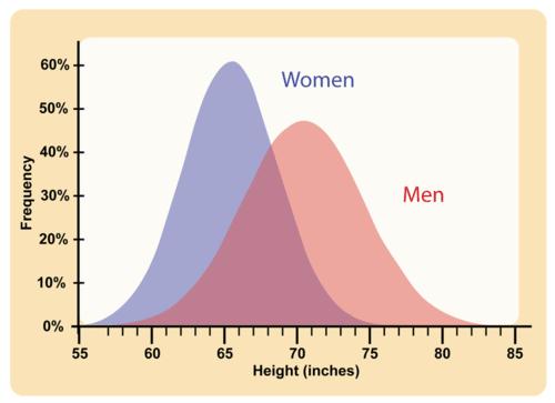 Human adult height distribution