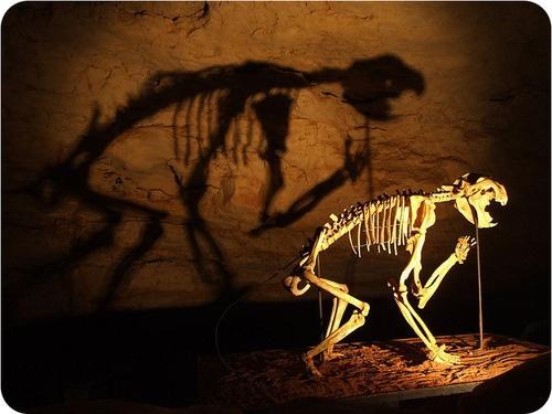Fossil of an extinct lion