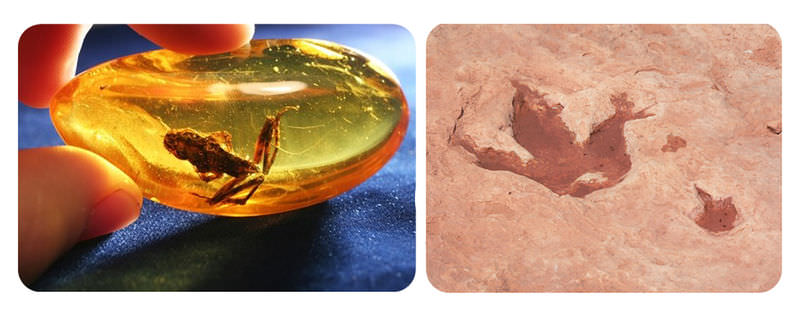 A frog trapped in amber, and the fossil footprints of a dinosaur