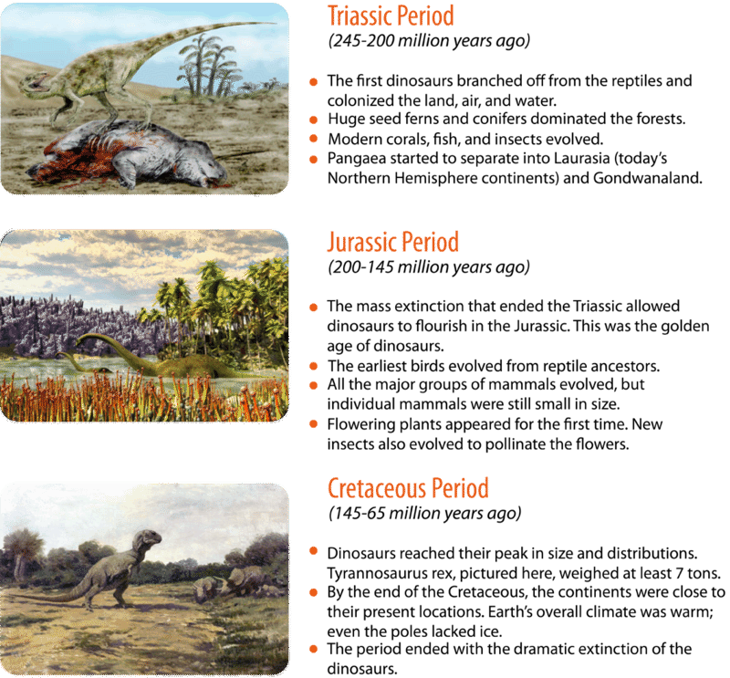 The Mesozoic Era consists of the Triassic, Jurassic, and Cretaceous periods