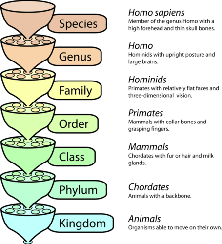 Levels in the Linnaean classification system