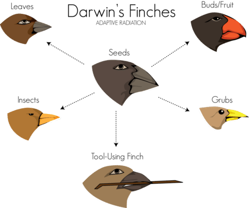 Galapagos finches' beak size and shape