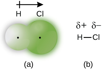 "Two diagrams are shown and labeled ""a"" and ""b."" Diagram a shows a small sphere labeled, ""H"" and a larger sphere labeled, ""C l"" that overlap slightly. Both spheres have a small dot in the center. Diagram b shows an H bonded to a C l with a single bond. A dipole and a positive sign are written above the H and a dipole and negative sign are written above the C l. An arrow points toward the C l with a plus sign on the end furthest from the arrow's head near the H."