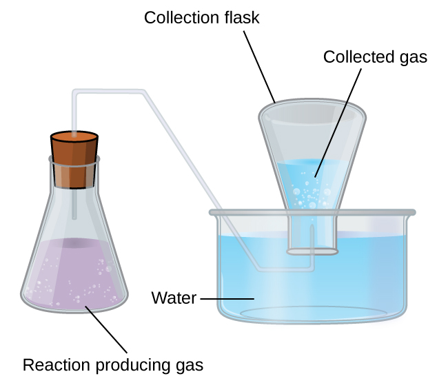 """This figure shows a diagram of equipment used for collecting a gas over water. To the left is an Erlenmeyer flask. It is approximately two thirds full of a lavender colored liquid. Bubbles are evident in the liquid. The label """"Reaction Producing Gas"""" appears below the flask. A line segment connects this label to the liquid in the flask. The flask has a stopper in it through which a single glass tube extends from the open region above the liquid in the flask up, through the stopper, to the right, then angles down into a pan that is nearly full of light blue water. This tube again extends right once it is well beneath the water's surface. It then bends up into an inverted flask which is labeled """"Collection Flask."""" This collection flask is positioned with its mouth beneath the surface of the light blue water and appears approximately half full. Bubbles are evident in the water in the inverted flask. The open space above the water in the inverted flask is labeled """"collected gas."""""""