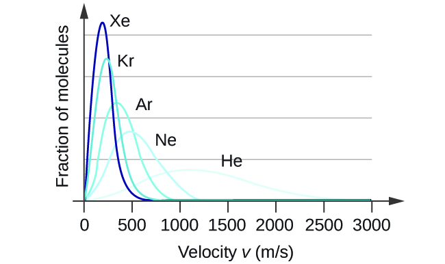 """A graph is shown with four positively or right-skewed curves of varying heights. The horizontal axis is labeled, """"Velocity v ( m divided by s )."""" This axis is marked by increments of 500 beginning at 0 and extending up to 3000. The vertical axis is labeled, """"Fraction of molecules."""" The tallest and narrowest of these curves is labeled, """"X e."""" Its right end appears to touch the horizontal axis around 600 m per s. It is followed by a slightly wider curve which is labeled, """"A r,"""" that is about half the height of the initial curve. Its right end appears to touch the horizontal axis around 900 m per s. The third curve is significantly wider and just over a third of the height of the initial curve. It is labeled, """"N e."""" Its right end appears to touch the horizontal axis around 1200 m per s. The final curve is only about one fourth the height of the initial curve. It is much wider than the others, so much so that its right reaches the horizontal axis around 2500 m per s. This curve is labeled, """"H e."""""""