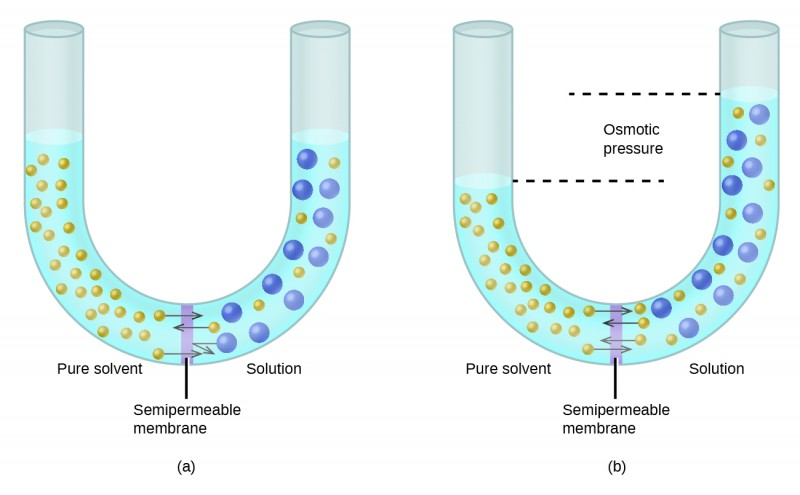 Osmosis And Osmotic Pressure Of Solutions
