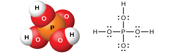 """A space filling model shows an orange atom labeled, """"P,"""" bonded on four sides to red atoms labeled, """"O."""" Three of the red atoms are bonded to white atoms labeled, """"H."""" A Lewis structure is also shown in which a phosphorus atom is single bonded to four oxygen atoms, three of which have two lone pairs of electrons, and one of which has three lone pairs of electrons. The oxygen atoms with two lone pairs of electrons are single bonded to hydrogen atoms."""