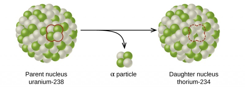 """A diagram shows two spheres composed of many smaller white and green spheres connected by a right-facing arrow with another, down-facing arrow coming off of it. The left sphere, labeled """"Parent nucleus uranium dash 238"""" has two white and two green spheres that are near one another and are outlined in red. These two green and two white spheres are shown near the tip of the down-facing arrow and labeled """"alpha particle."""" The right sphere, labeled """"Daughter nucleus radon dash 234,"""" looks the same as the left, but has a space for four smaller spheres outlined with a red dotted line."""