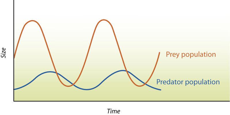 Predator-Prey Population Dynamics