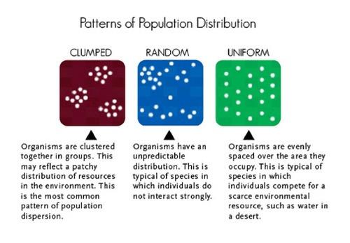 Clumped, random, and uniform population distributions