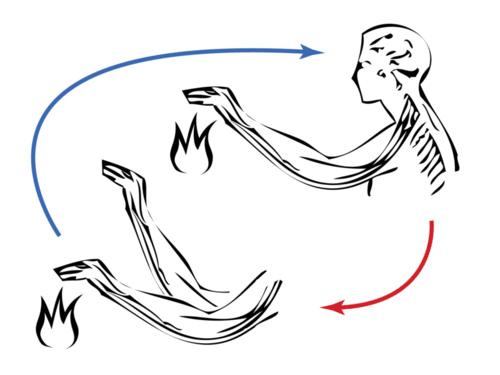 Reflex arc mechanism
