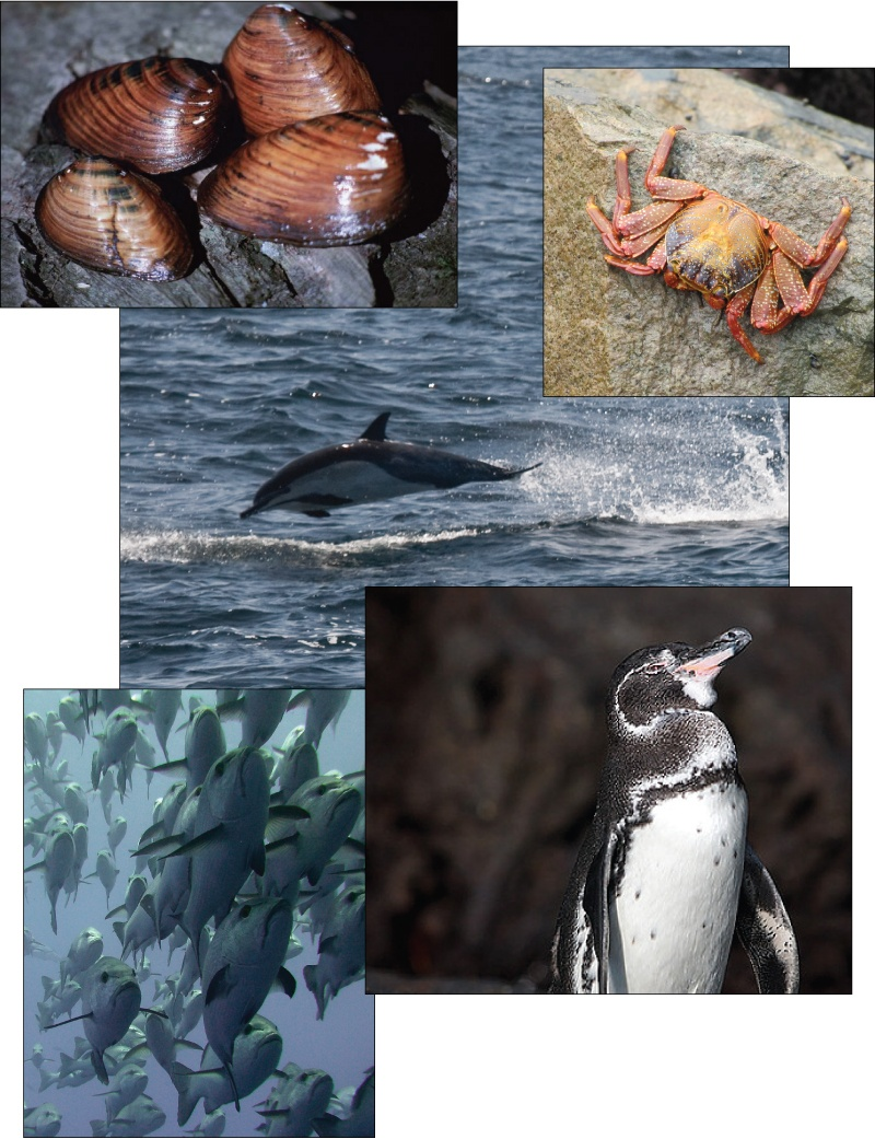 The photo collage shows mollusks, a crab, a dolphin, a penguin, and a school of fish.