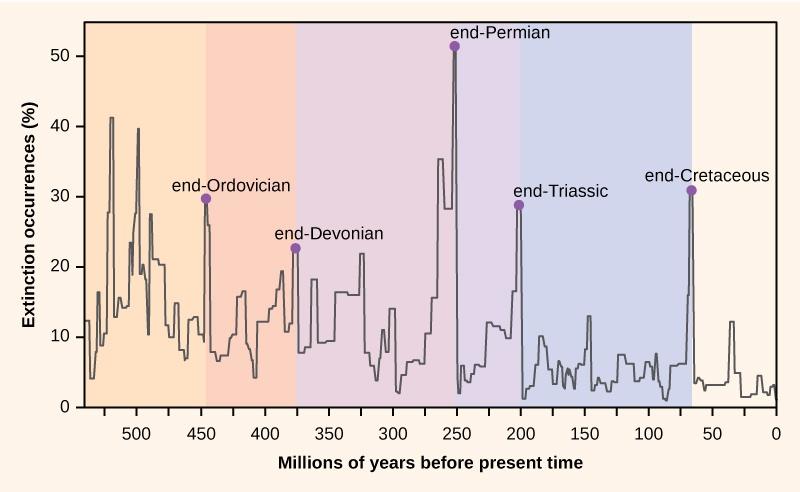 The chart shows percent extinction intensity versus time in millions of years before present. Extinction intensity spikes at boundaries between periods, including the end of the Ordovician, late Devonian, end of the Permian, end of the Triassic, and end of the Cretaceous periods.