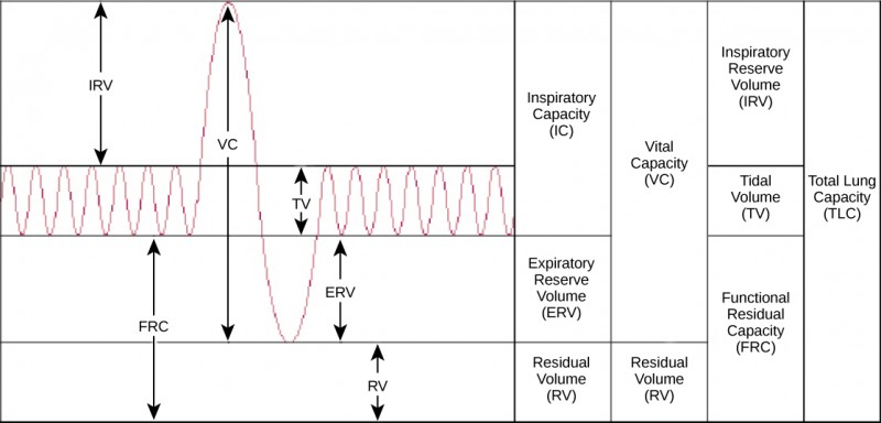 The chart shows the exchange of air during inhalation and exhalation, which resembles a wave pattern. During normal breathing, only about eight percent of air in the lungs is exchanged, and the amount of air in the lungs is one-half the total lung capacity. When a person breathes in deeply, total lung capacity is attained. The amount of air taken in is called the inspiratory capacity. Forceful exhalation results in expulsion of the expiratory reserve volume. A residual volume of air of about eight percent is left in the lungs. The vital capacity is the difference between the total lung capacity and the residual volume. The inspiratory reserve volume is the difference between the total lung capacity and the amount of air in the lungs after taking a normal breath. The functional residual capacity is the amount of air in the lungs after normal exhalation.