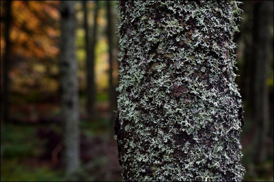 (b) shows a tree covered with lichen.