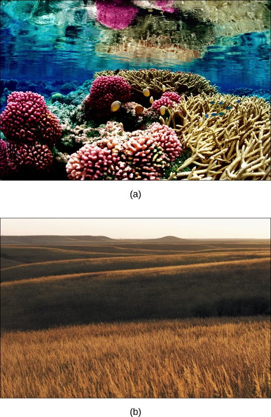 Photo a shows a coral reef. Some of the coral is lobe-shaped, with bumpy pink protrusions, and the other coral has long, slender beige branches. Fish swim among the coral. Photo b shows a rolling prairie, with nothing but tall brown grass as far as the eye can see.