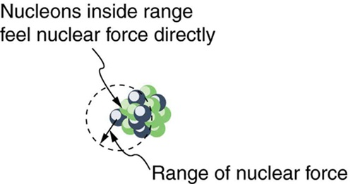 The image shows a bunch of spherical nucleons inside a nucleus. A circular dashed path is shown which depicts the range of nuclear force and the nucleons inside that range feel nuclear force directly.